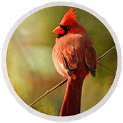 Male Cardinal In The Sun - Digital Paint Round Beach Towel
