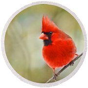 Male Cardinal On Angled Twig - Digital Paint Round Beach Towel