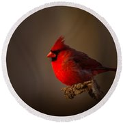 Male Cardinal Subdued Forest Background Round Beach Towel