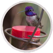 Male Costa Hummingbird Round Beach Towel