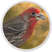 Male Finch With Seed Round Beach Towel