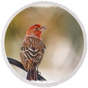 Male House Finch - Digital Paint And Frame Round Beach Towel