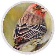 Male House Finch - Digital Paint Round Beach Towel