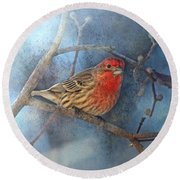 Male House Finch With Blue Texture Round Beach Towel