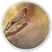 Male Housefinch Looking Up Round Beach Towel