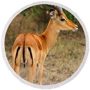 Male Impala With Horns Round Beach Towel