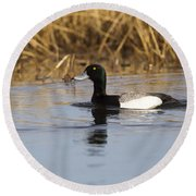 Male Lesser Scaup Round Beach Towel