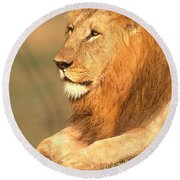Male Lion Round Beach Towel