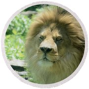 Male Lion Up Close Round Beach Towel
