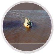 Male Mallard Duck Round Beach Towel