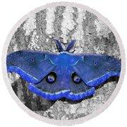Male Moth - Brilliant Blue Round Beach Towel