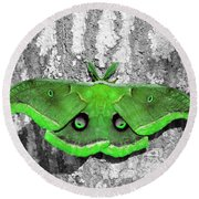 Male Moth Green Round Beach Towel by Al Powell Photography USA