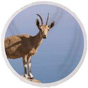 Male Nubian Ibex 1 Round Beach Towel
