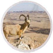Male Nubian Ibex Capra Ibex Nubiana 1 Round Beach Towel