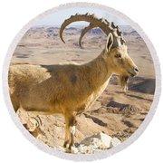 Male Nubian Ibex Capra Ibex Nubiana Round Beach Towel