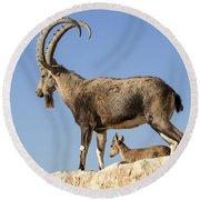 Male Nubian Ibex Round Beach Towel