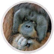 Male Orangutan  Round Beach Towel