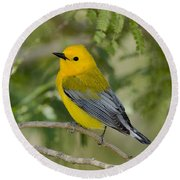 Male Prothonotary Warbler Round Beach Towel