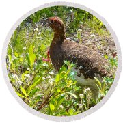 Male Ptarmigan Along Savage River Trail In Denali Np-ak Round Beach Towel