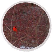 Male Red Cardinal In The Snow Round Beach Towel