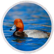 Male Red Head Duck Round Beach Towel