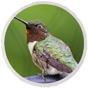 Male Ruby Throated Hummingbird Round Beach Towel