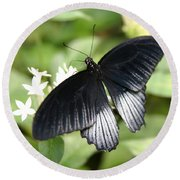Male Scarlet Swallowtail Round Beach Towel