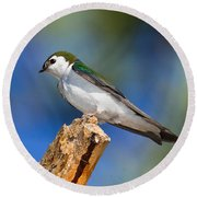 Male Violet-green Swallow Round Beach Towel