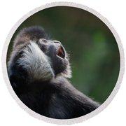 Male White-cheeked Gibbon Round Beach Towel