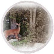 Male Whitetail Deer Round Beach Towel