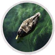 Mallard Duck On Green Pool Round Beach Towel