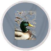 Mallard Duck Portrait Round Beach Towel