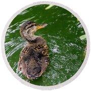 Mallard Duckling Round Beach Towel
