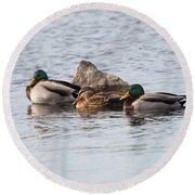 Mallard Ducks Sleeping Round Beach Towel