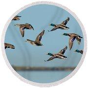 Mallard Flock Flying Round Beach Towel