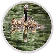 Mallard Hen With Ducklings And Reflection Round Beach Towel