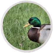 Mallard In The Grass Round Beach Towel