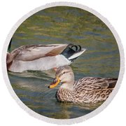 Mallard Pair Round Beach Towel