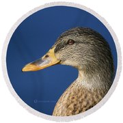 Mallard Queen Round Beach Towel
