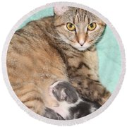 Mama Cat And Her Kittens Round Beach Towel