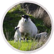 Mama Sheep And Her Two Lambs Round Beach Towel