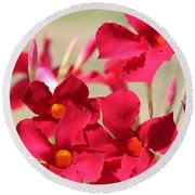 Mandevilla Named Sun Parasol Crimson Round Beach Towel