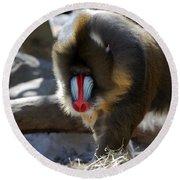 Mandrill Monkey Round Beach Towel