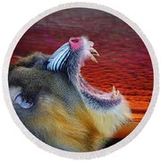 Mandrill Roaring At The End Of A Day  Round Beach Towel