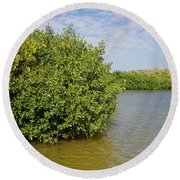 Mangrove Fores Round Beach Towel by Carol Ailles