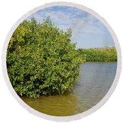 Mangrove Forest Round Beach Towel