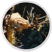 Mantids Hatch Round Beach Towel