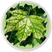Maple Leaf In The Laurel Round Beach Towel
