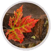 Maple Leaf On Oak Stump Round Beach Towel