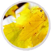 Maple Leaves At Autumn Glory 1 Round Beach Towel
